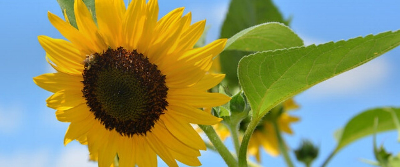 a_day_in_the_garden_2020_hero_image_1280x534_extension