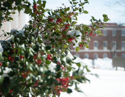 A holly tree catches snowfall outside of Townsend Hall in Newark.