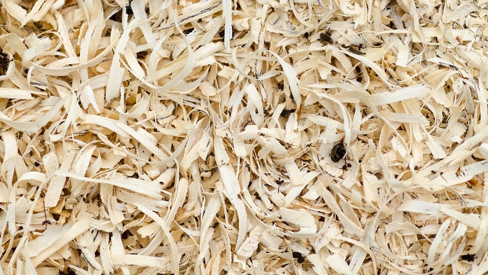 Hardwood Sawdust as Poultry Bedding