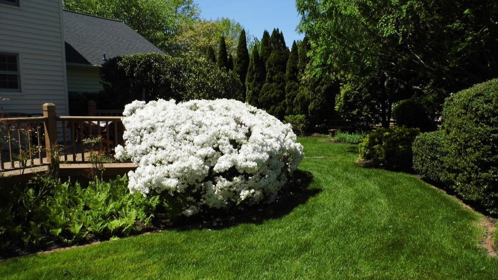 Livable Plants for a Healthy Home Landscape