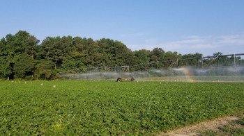 Harvesting the research plots