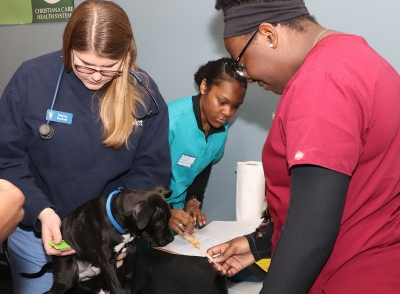 Students learning from veterinarians at a One Health clinic