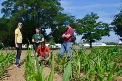 Professor Ivan Hiltpold and students doing maize research in the field