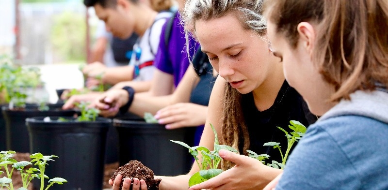Students in PLSC140 People & Plants: Feast or Famine with Dr. Tom Evans, working on their potato plants in the Fischer Greenhouse and in the fields with lima beans and roses.
