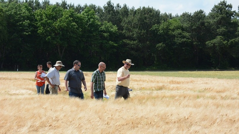 Barley Variety Trials Tour
