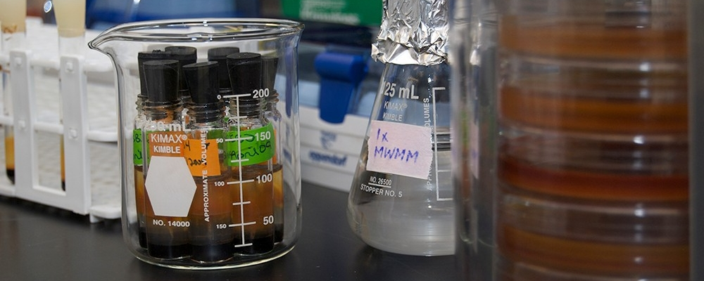 samples in tubes, in a beaker, by a flask, on a lab counter
