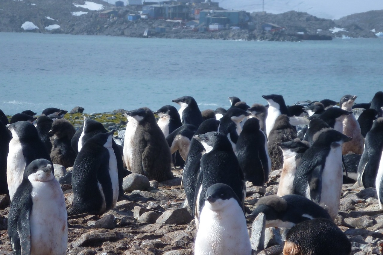 penguins on shore