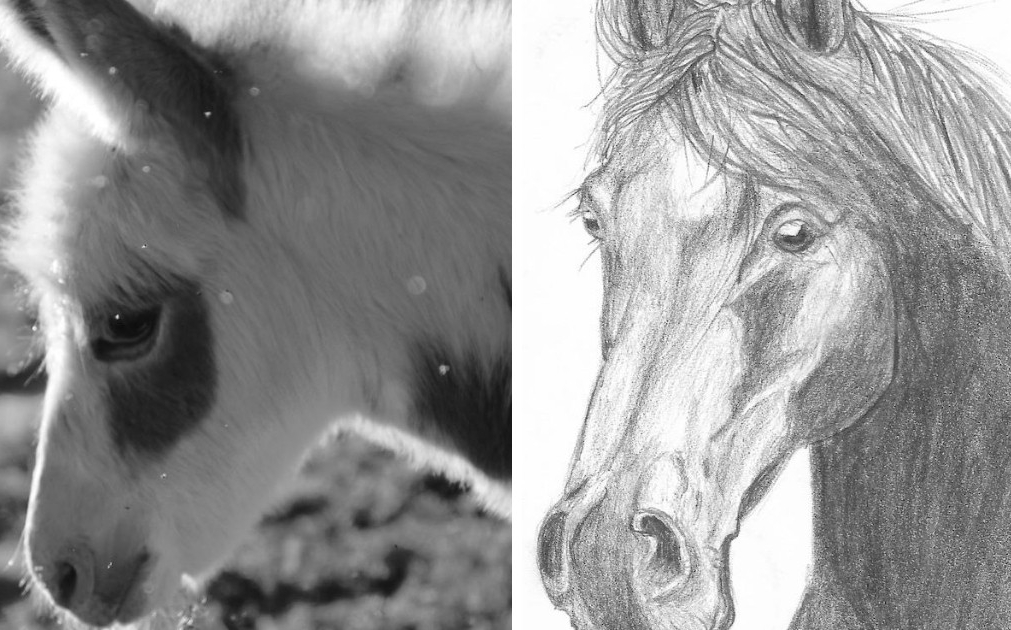 Equine Art Contest Winner Daisy Timney Cooperative Extension 4-H