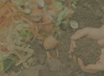 Background photo for backyard composting button
