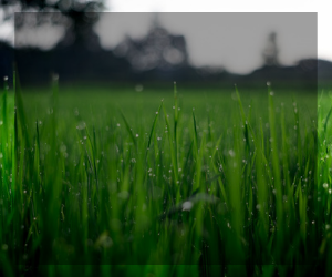 Turfgrass background panel