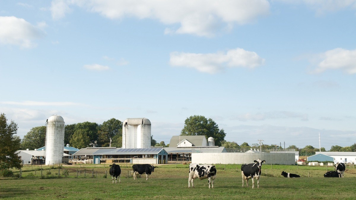UDDairy-farm-photo