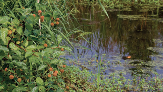 A photo of one of the south campus wetland areas