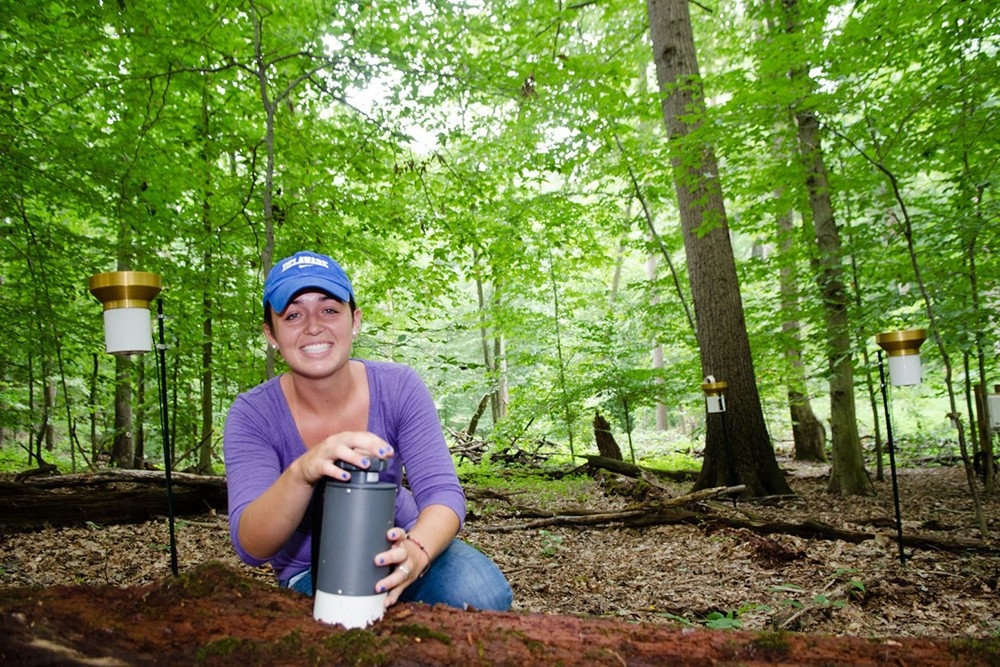 Student conducting research in forest