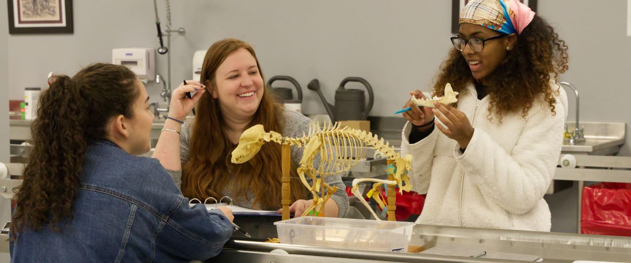 Three students analyze a horse skeleton