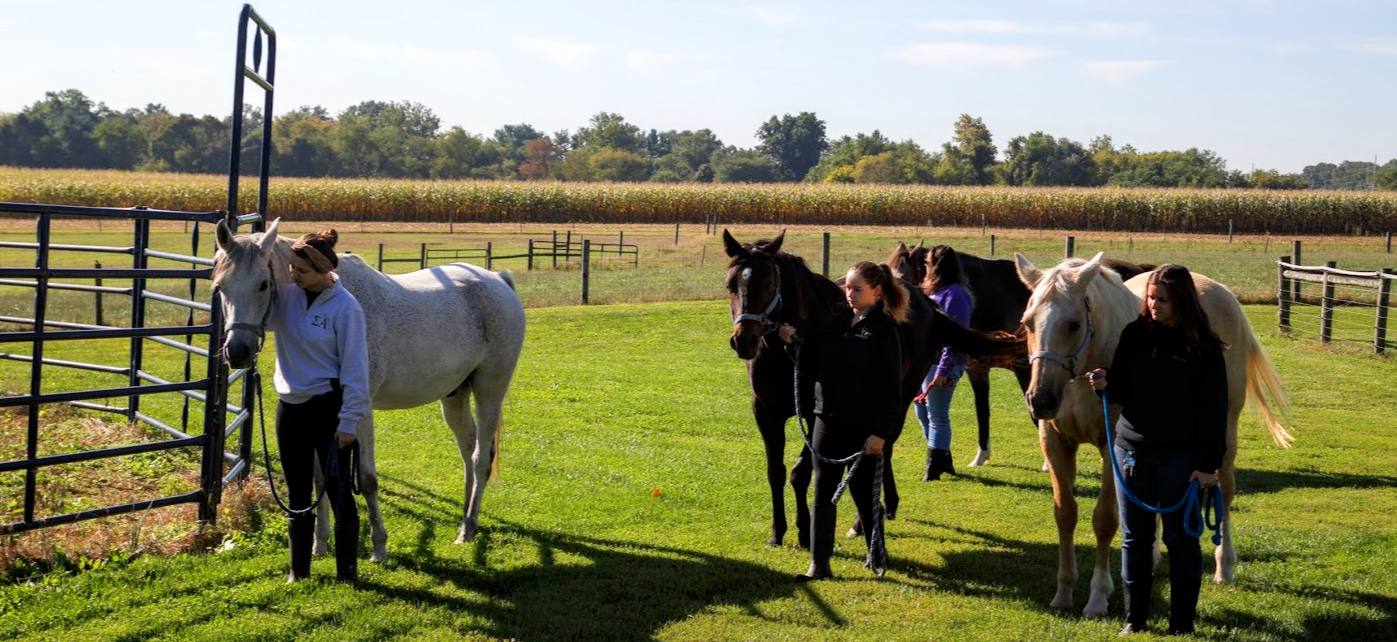 Students in equine science club walking with horses on Webb Farm