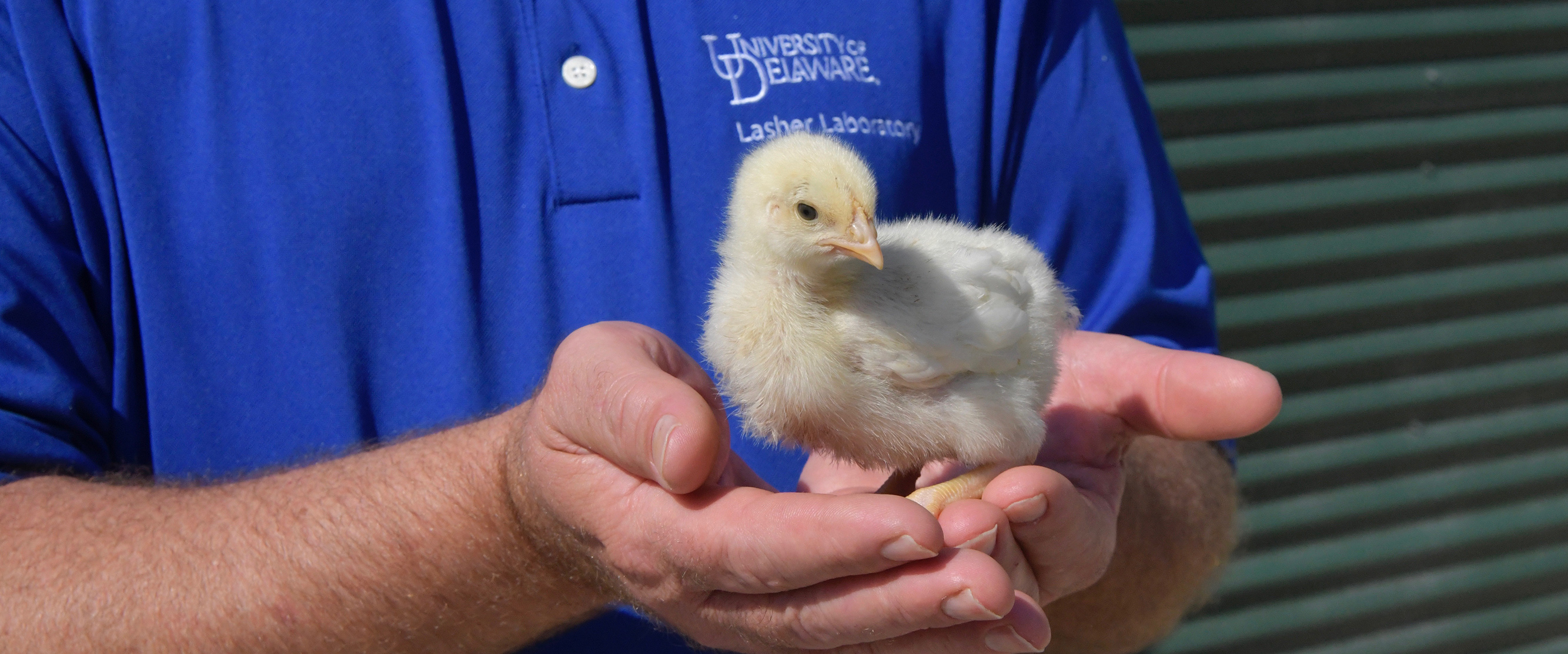 Researchers in Lasher Lab work on diagnostic services of the Poultry Health System