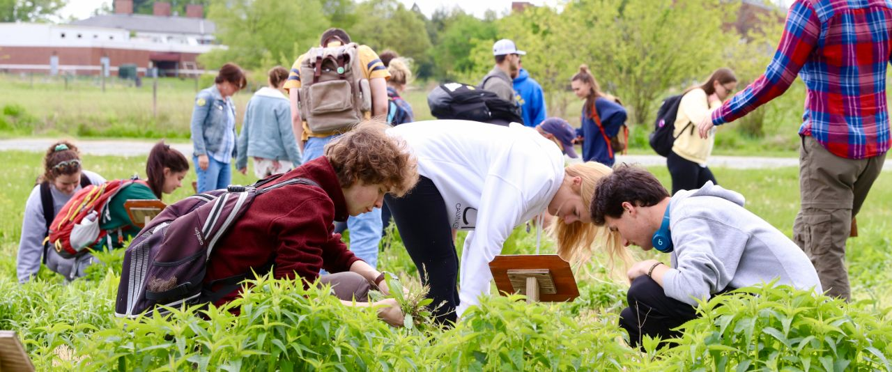 Students investigate pollinators in plant science research plots.