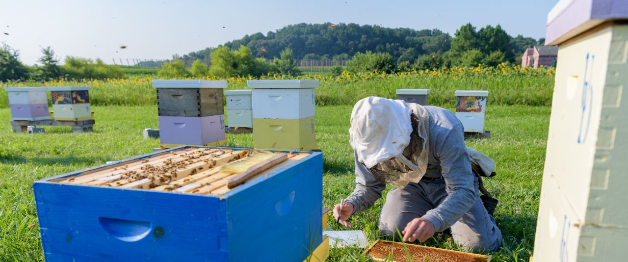 Ben Sammarco works with bees at UD's Apiary.