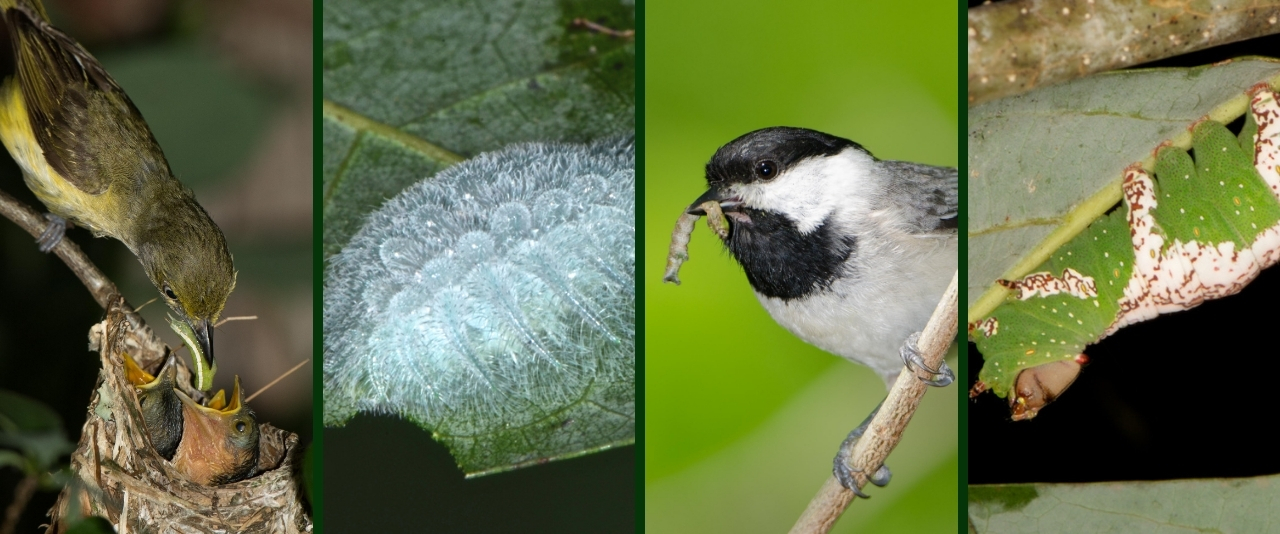Different species that benefit from key native plants