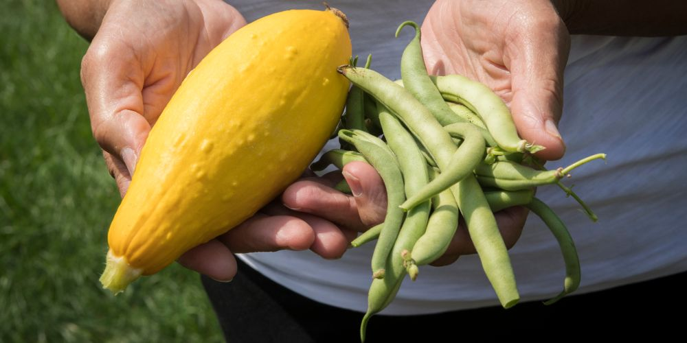 Hands holding squash and green beans
