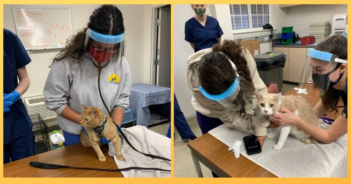 (Left) Junior Jocelin Aguilera uses a stethoscope to listen to Ravioli's heart.  (Right) Teaching assistant Alina Roell (right) holds onto Tui while junior Carolina Graham is taking his heart rate.