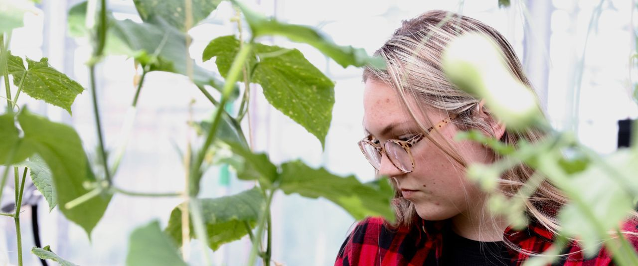 Student intently examines plants in Fischer Greenhouse.