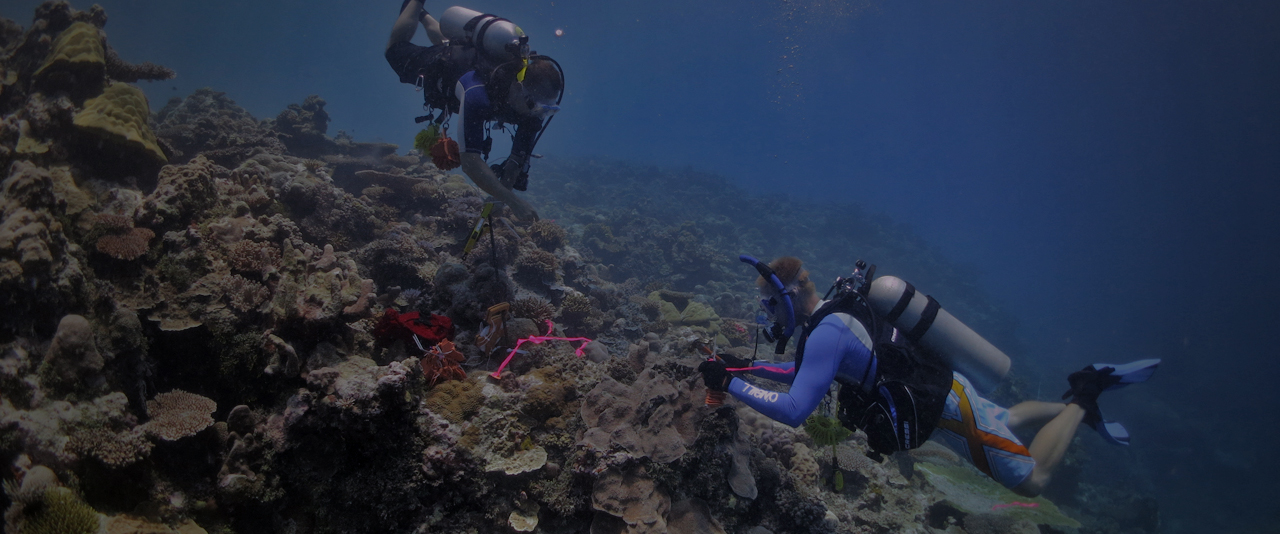 Students scuba diving to examine coral