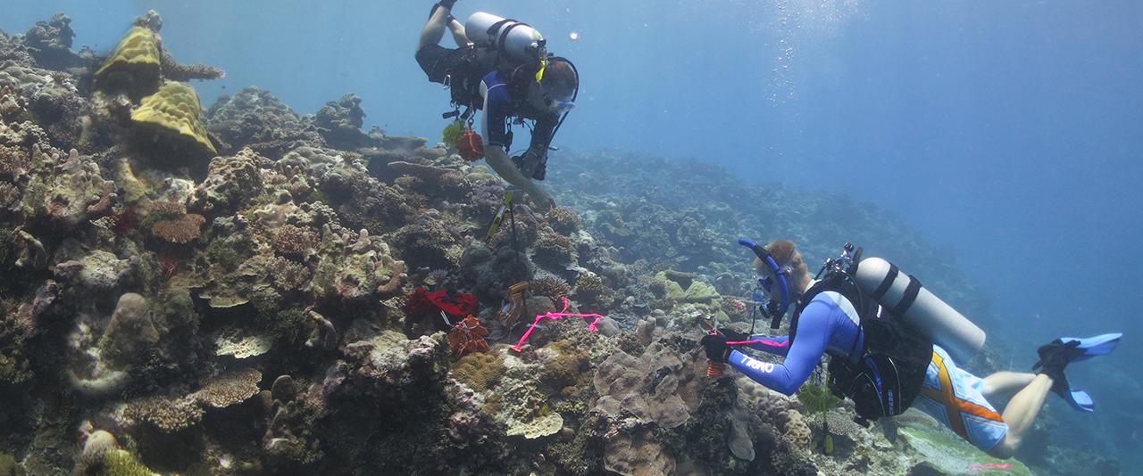 Faculty and student scuba diving examining coral reef.