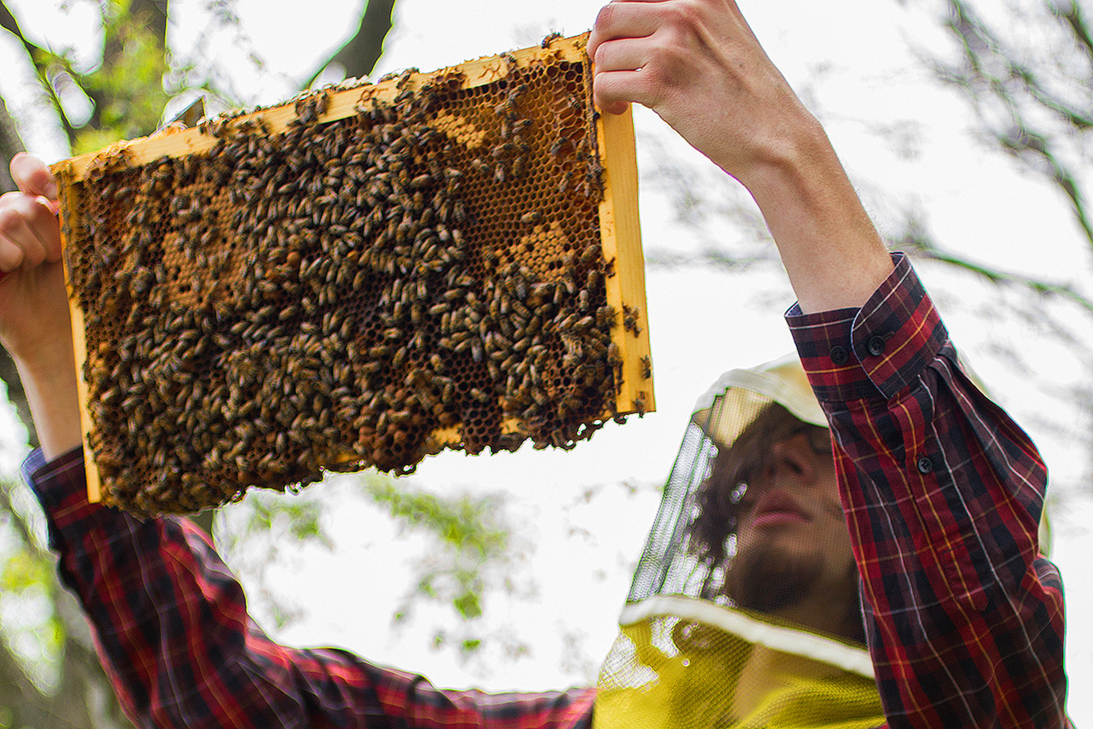 Insect Ecology and Conservation student beekeeping
