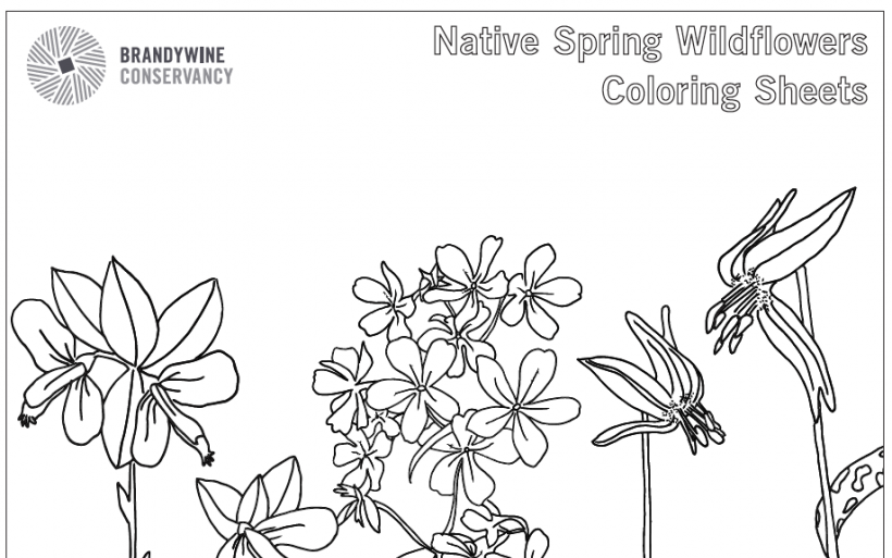 native-wildflower-coloring-sheet-image