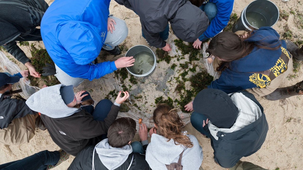 Overhead shot of students conducting hands-on research at a beach