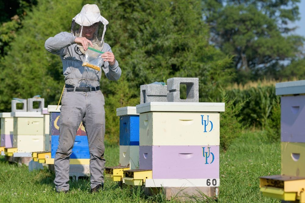 A UD beekeeper wearing protective gear checks the beehives.