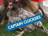 Captain Cluckers