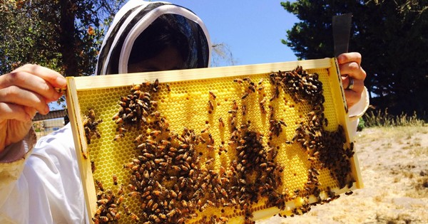 Coal miners could shift to beekeeping