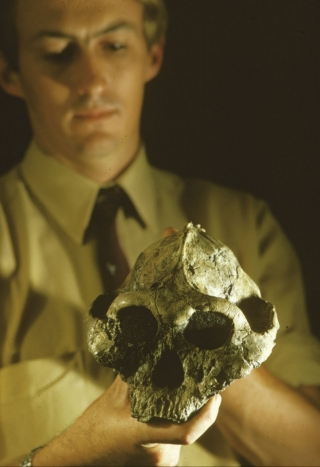 Paleoanthropologist Richard Leakey holds the skull of the hominid Australopithecus robustus, which he found in August 1969 at East Turkana, Kenya. The skull was dated at around 1.6 million years old.