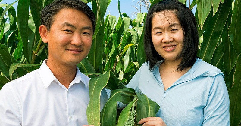 Jeffrey Caplan, UD associate professor of plant and soil sciences, and post-doctoral researcher Kunhuang Haung, are part of a $3.5 million NSF grant to understand how pollen develops in plants, such as corn.