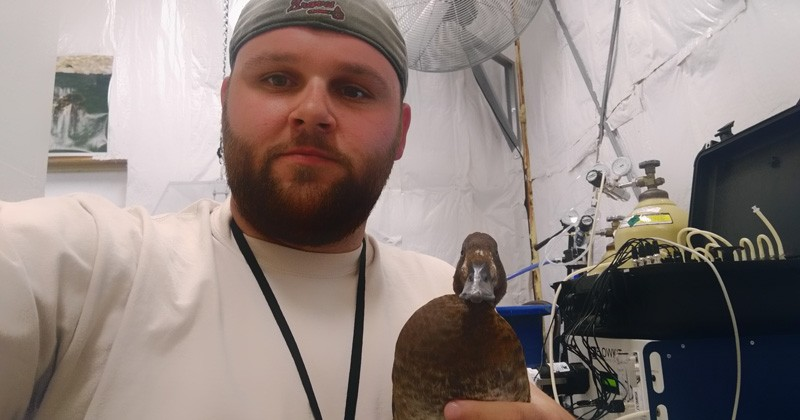 UD graduate student Jake McPherson is studying energy expenditures of ducks.