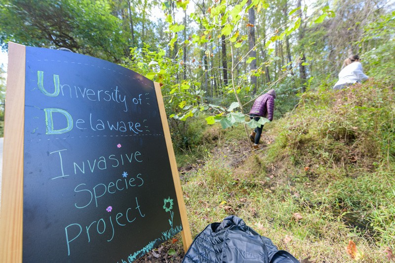 UD students head up a slope into the woods to tackle invasive plants - and learn to communicate what they see in Prof. McKay Jenkins' environmental literature class.