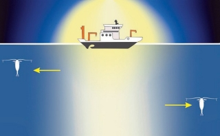 Infographic on the light affecting research on plankton