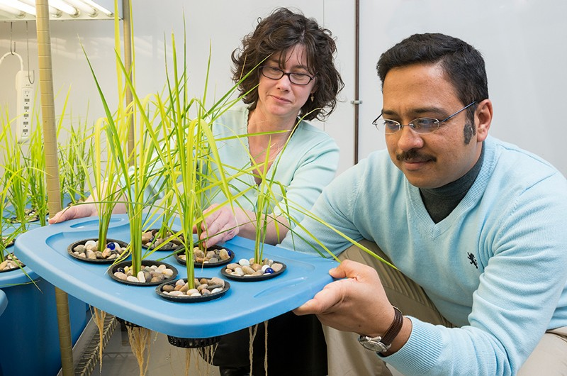 Janine Sherrier (left), professor of plant and soil sciences, and colleague Harsh Bais, associate professor of plant and soil sciences at UD