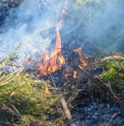 Planned fire to reduce excessive growth in grassland