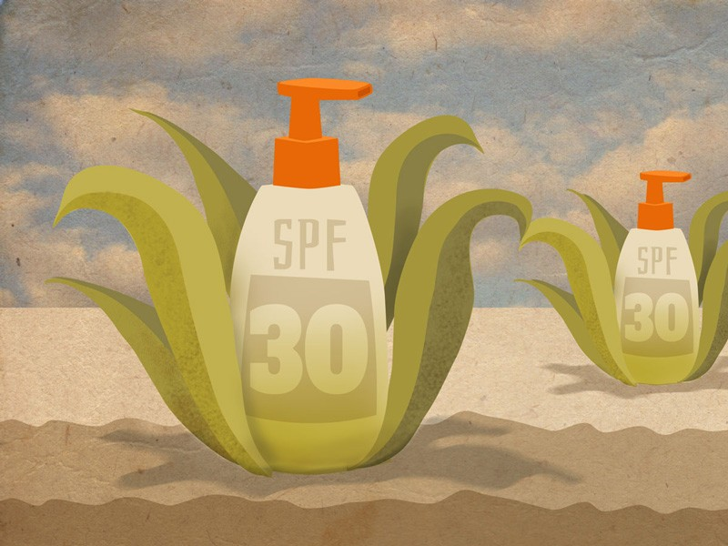 Illustration of sunscreen made of plant matter
