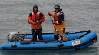 Aaron Carlisle (right), a UD assistant professor of marine biosciences, worked on a research team that tagged salmon sharks to determine their movements.