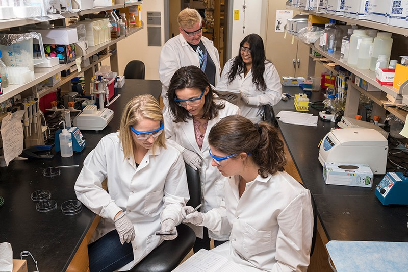 Among the doctoral students who work in the microbiology lab of Ramona Neunuebel (center) are (left to right): Rebecca Noll, Samual Allgood, Barbara Romero-Dueñas and Colleen Pike.