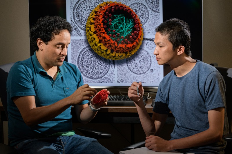 UD Professor Juan Perilla (left) and doctoral student Chaoyi Xu examine the structure of the HIV virus, using both a physical and a computer-generated model.