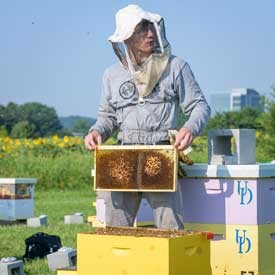 Hives that have more genetic diversity have a greater chance of resisting disease. The brood mixing project that undergraduate Ben Sammarco is part of seeks to artificially raise the diversity of bee hives to improve their resilience.