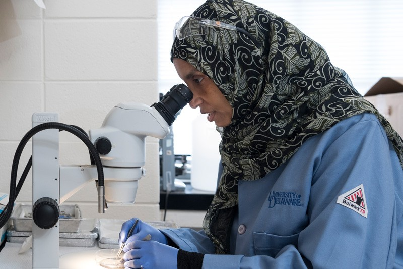 Salma Al Saai works in biologist Salil Lachke's lab at UD, isolating DNA to conduct experiments on a gene mutation linked to the formation of cataracts.