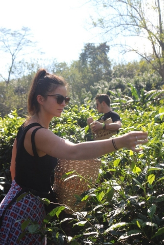 Emily Williamson, a junior marketing and operations management major, joined other UD students in meeting corporate executives in Thailand and Australia. The study abroad program also included several cultural excursions, including the opportunity to pick tea.