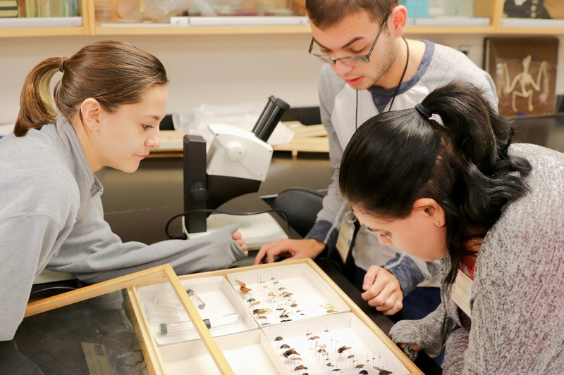 Left to right, UD students Sam McGonigle, Nick Benton, and Sophie Menos work as CDC entomologists, searching insect specimens to identify potential disease vectors during a mock disease outbreak.