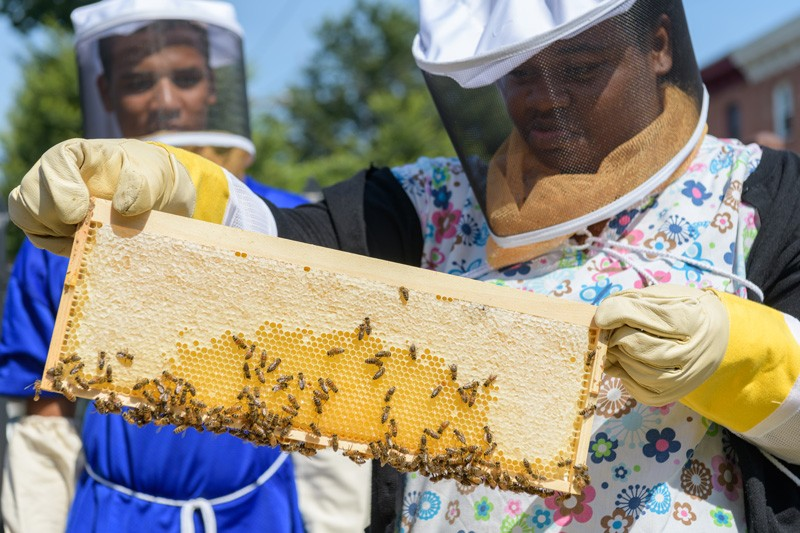 Ifunanya Ugorji examines a frame she's removed from the hive. The white area is where bees have filled the tiny hexagonal compartments with honey and capped them with wax, while the yellow area is honey that has not yet been covered.